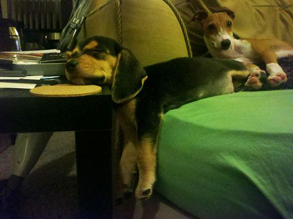 Cats And Dogs Losing The Battle Against Human Furniture