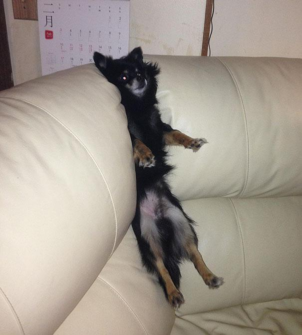 funny-cats-dogs-stuck-furniture-31