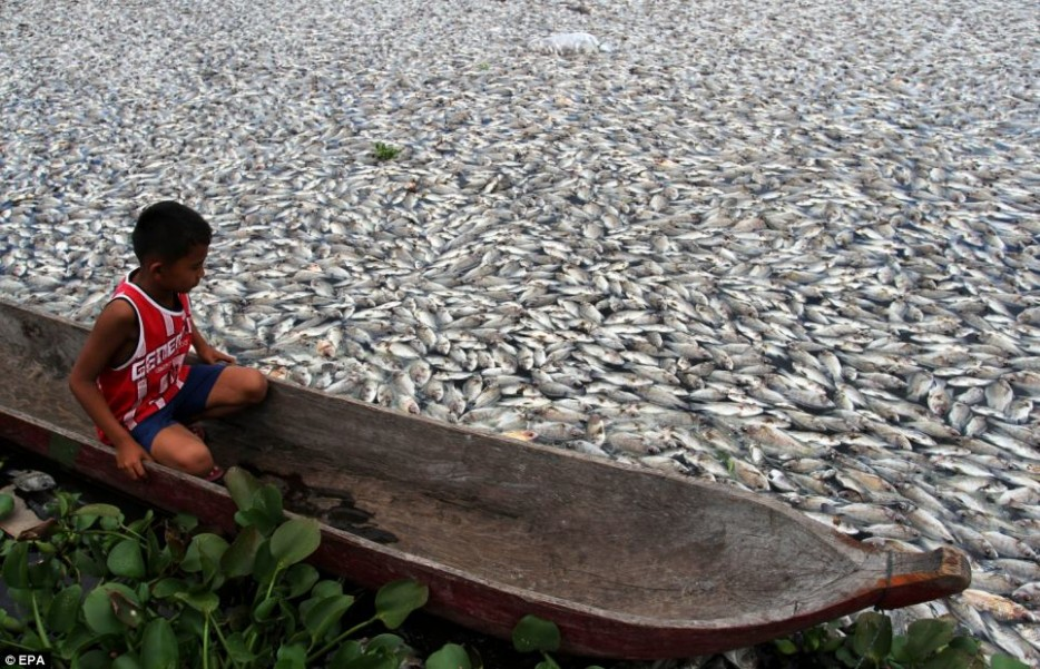 Fish-Die-Off-Indonesia-934x