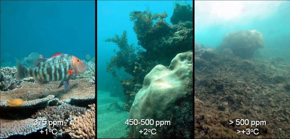 ocean-acificiation-coral-934x