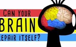 Beyniniz kendini yenileyebilir mi?