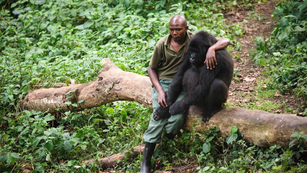 Insécurité dans le parc de Virunga: Les autorités militaires des forces armées de la république démocratique du Congo défendent momentanément la pénétration dans ce patrimoine mondial
