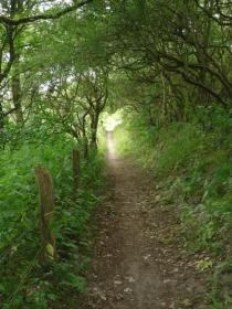 Wir wandern durch Wald und Feld