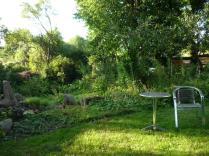 sieht grüner aus als in echt- die Trockenheit hinterläßt Spuren selbst im Schattengarten