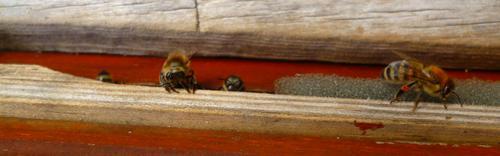 Manche haben auch Pollenhosen in derselben Farbe