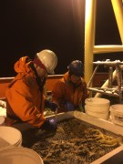 Craig Smith and graduate student Astrid Leitner of UH sorting animals from the Blake trawl in the wee hours of a cold night.