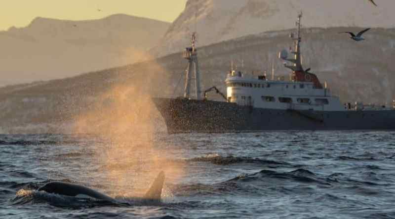 Winterse Expeditiecruises naar het Noorden van Noorwegen