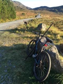 I took the bike up to Mørkevatnet