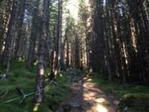 Very nice path!
