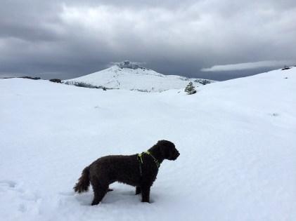 Deep snow for Karma