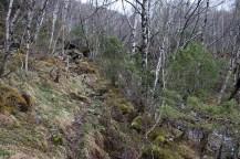 Nice forest path, so far.
