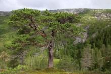 I liked this tree...