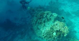 Divers (I)