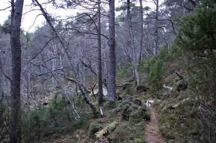 Forest traverse