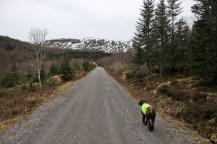 Up from Snipsøyrvatnet