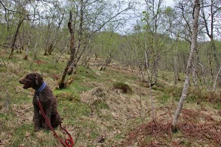 Open, nice birch forest