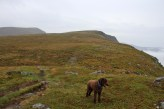 On the ridge. Storehanen in the background