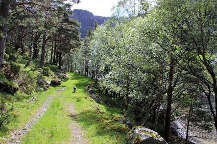 Along lake Norddalsvatnet