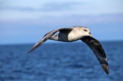 Lots of Herring Gulls
