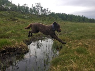 Brown dogs can jump!