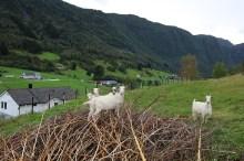 Locals in Bjordal