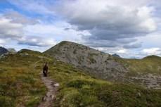 Towards Sandhornet