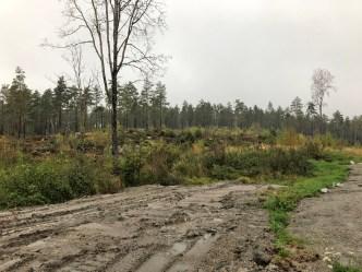 The Stikkaåsen forest