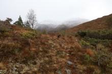 The ridge to Skarphornet begins here