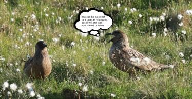 Fun birds!