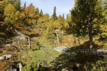 Niceb birch forest!