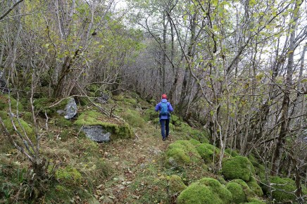 Nice path, nice forest
