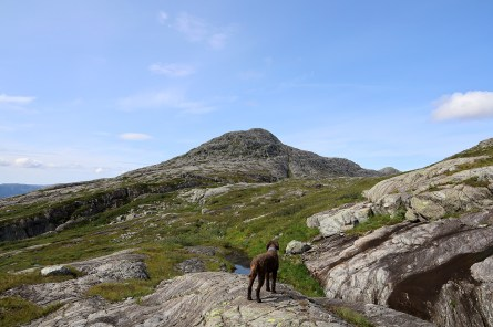Finally back on the Dalaunfjellet side, after a strenuous ascent from lake Tettingvatnet