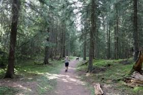 In the Børsåsen forest