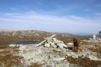 On top of Blomtjønneggin with Røysdalsnuten in the background