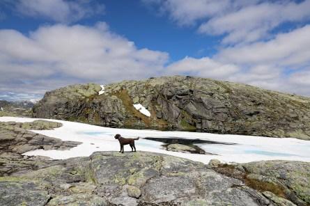 Rimmafjellet high point ahead