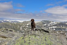 On Rimmafjellet, with Jostefonn glacier in the background