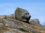 A rock face