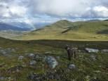 View towards Rjåhornet