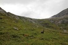 Deep into Ålhusdalen valley
