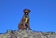 Karma - my loyal hiking buddy