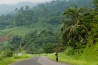 Lush vegation, Cameroon