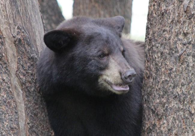 black bear florida hunt