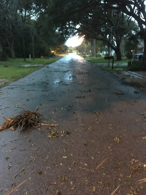 South Flagler Avenue in Flagler Beach at first light: some shrubbery down, but the power was still on and water levels were low. (c FlaglerLive)