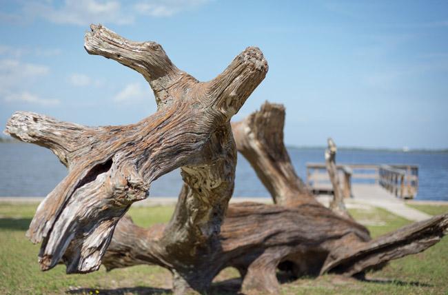 palm coast 2016 photo contest