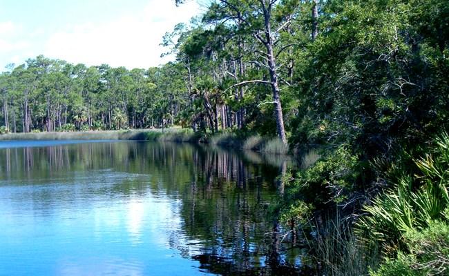 pellicer creek