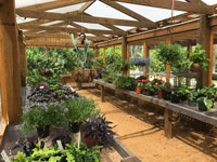 washington oaks garden state park plant sale