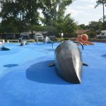 The whale and whale tail, the mantra ray, the rings, and the two turtles in the toddler area will be closed to the public as repairs to the splash pad at Holland Park proceed. (© FlaglerLive)