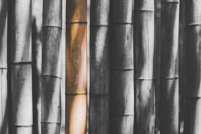 竹の葉が枯れるのを防ぐには
