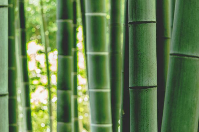 七夕の竹の保存方法