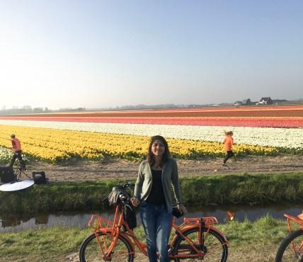 keukenhof tulip festival
